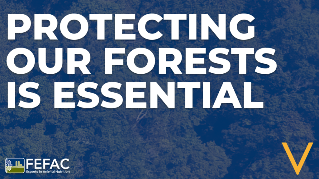 New FEFAC position papers on tackling embedded deforestation